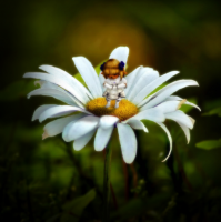 'Tiny Tarutaru' by Lockpick